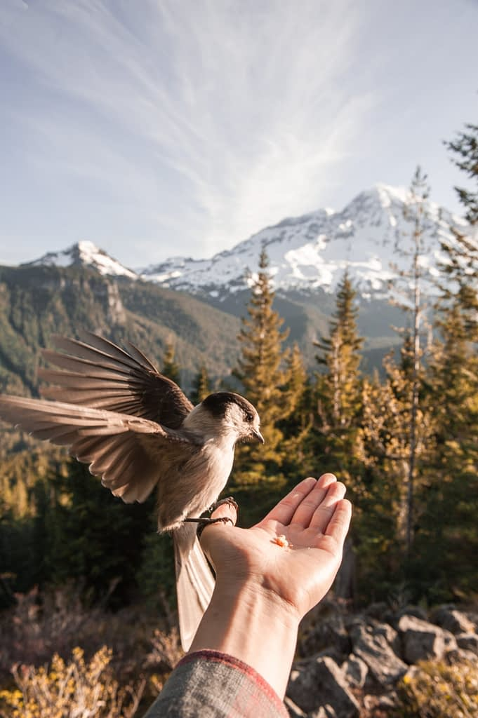 A bird perched on a hand. Like the picture, you can only attain peace by gaining control of your anger